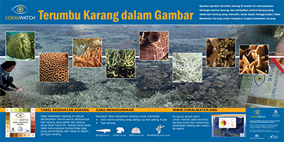 virtual-reef-poster-indo